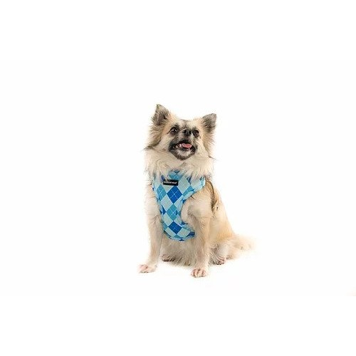 Blue Golfing Harness - Extra Small